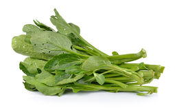 Chinese mustard green on white background (Nontoxic) Royalty Free Stock Photos