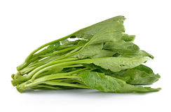 Chinese mustard green on white background (Nontoxic) Royalty Free Stock Image