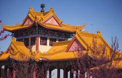 Chinese Nan Hua Temple. Beginning of spring in South Africa. Royalty Free Stock Image