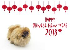 Chinese New Year background with Pekingese. Chinese New Year background with Young Pekingese on snow and lanterns royalty free stock photography