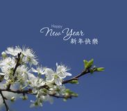 Chinese New Year background with spring blossom. Chinese New Year background with Cherry spring blossom stock image
