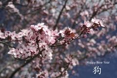 Chinese New Year background with spring blossom. Chinese New Year background with Cherry spring blossom stock photos