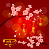 Chinese New Year card with plum blossom, lantern. Chinese New Year poster with red paper lanterns hanging on branches of blooming plum tree with pink flowers Stock Photography