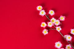Chinese new year cherry blossom flowers with copyspace for desig Stock Images