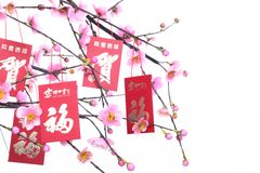 Chinese New Year Decoration. Red Packet on Plum Branch,Character on Packet Symbolizes Good Luck