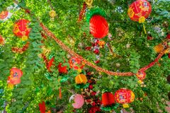 Chinese new year decoration in a tree royalty free stock images