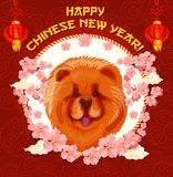 Chinese New Year dog card with lantern and flower. Chinese New Year dog in frame of Spring Festival flower greeting card. Asian zodiac horoscope dog and animal Royalty Free Stock Photo
