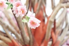 Close up sweet pink cheery blossom for background backdrop royalty free stock photography