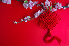 Chinese new year festival decorations plum flowers on red  with. Copy space Royalty Free Stock Photos