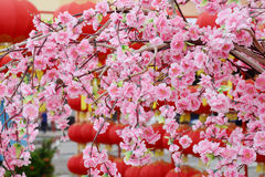 Chinese New Year flower tree Royalty Free Stock Images