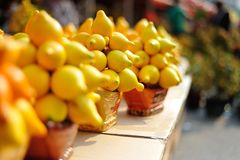 Chinese New Year--Fortune fruit Royalty Free Stock Photography