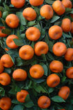 Chinese New year fruit - tangerines royalty free stock images
