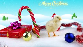 2017 Chinese New Year greeting card with small rooster. In Santa hat with winter background, Christmas decorations and snowfall