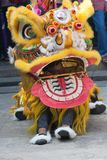 Chinese New Year, the Lion dance Royalty Free Stock Photo