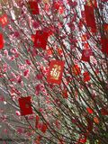Chinese New Year Money Tree. With Red Packets Stock Images