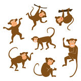 Chinese New Year 2016 monkeys decoration icon. Monkey in east style. Happy ape collection. Vector illustration. Brown. Chinese New Year 2016 monkeys decoration Stock Images