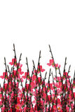 Chinese New Year plum blossom background. Chinese New Year stalks of plum blossom on white background with copy space