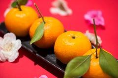 Chinese new year`s decoration. Mandarin orange on red background Stock Photos