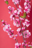 Chinese new year's decoration. Stock Images
