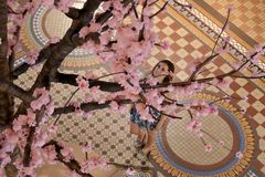 Chinese New Year Spring Festival 2019 Year of the Pig. Young woman looking at Cherry Blossom tree made out of tiny pigs.In Chinese culture, pigs are the symbol royalty free stock photos