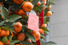 Free Chinese New Year Tangerines Royalty Free Stock Photography - 68879517