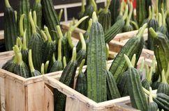 Chinese Okra Royalty Free Stock Photography