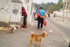The Chinese old man in the stray dogs Stock Photography
