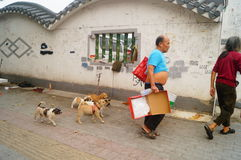 The Chinese old man in the stray dogs Stock Image