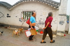 The Chinese old man in the stray dogs Stock Photo