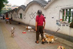 The Chinese old man in the stray dogs Royalty Free Stock Photography
