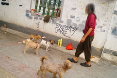 The Chinese old man in the stray dogs Stock Photos