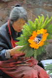 Chinese old woman wreathed flowers into a garland. Chinese old woman makes garland, in Huanglong Xi Ancient Town Scenic Zone,Sichuan,China royalty free stock photography