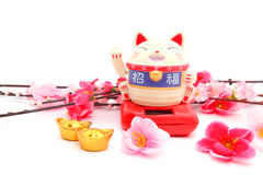 Chinese oriental lucky cat figure. And Plum Flowers isolated on white, the two characters on the cat are zhao fu , meaning fortune come stock photography