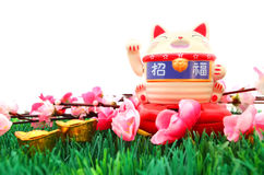 Chinese oriental lucky cat figure. And Plum Flowers isolated on white, the two characters on the cat are zhao fu , meaning fortune come stock image