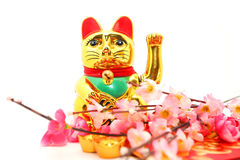 Chinese oriental lucky cat figure. And Plum Flowers and red packet isolated on white royalty free stock images