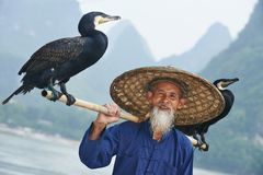 Chinese oude persoon met aalscholver voor visserij Stock Fotografie