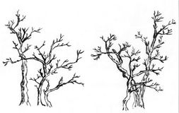 Chinese paint tree ,the three trees Royalty Free Stock Image