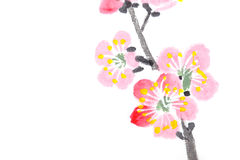 Chinese painting of flowers, plum blossom. Traditional Chinese painting of flowers, plum blossom close up white background stock illustration