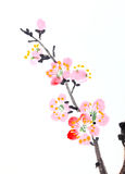 Chinese painting of flowers, plum blossom. Traditional Chinese painting of flowers, plum blossom close up white background Stock Image