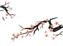 Chinese painting of pink plum Royalty Free Stock Images