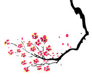 Chinese painting of plum. In a white background vector illustration