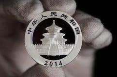 Chinese Panda Silver Coin White Glove Stockbilder