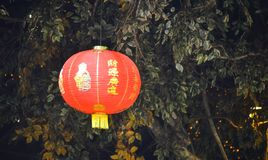 Chinese paper lampion at chinese new year celebration. Hanging under tree royalty free stock image