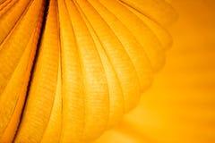 Chinese paper lantern. In illuminating orange light at night Royalty Free Stock Photos