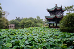 Chinese pavilion in lake of lotuses Royalty Free Stock Images