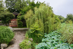 Chinese pavilion by lotus pond in summer green on cloudy day Royalty Free Stock Photography