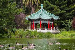 The Chinese Pavilion on the shoreline of Stow Lake; a group of Canada geese swimming on the lake, Golden Gate park, San Francisco. California royalty free stock image