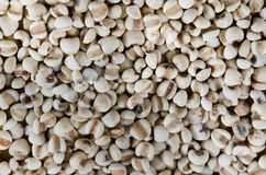 Chinese pearl  barley Stock Photography