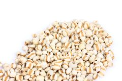 Chinese pearl barley, job`s tears, traditional chinese herbal medicine Stock Image