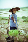 Chinese peasant Stock Photos